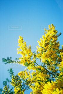 黄色の花の写真・画像素材[1123008]