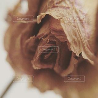 近くの花のアップの写真・画像素材[1124152]