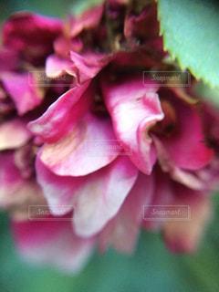 近くの花のアップの写真・画像素材[1124156]
