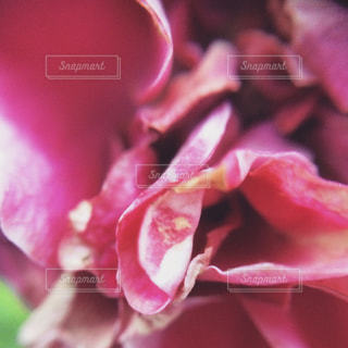 近くの花のアップの写真・画像素材[1124157]