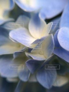 近くの花のアップの写真・画像素材[1125054]