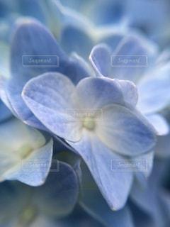近くの花のアップの写真・画像素材[1125055]