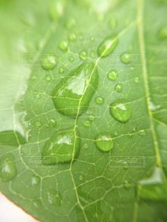 近くに緑の葉のアップの写真・画像素材[1125062]