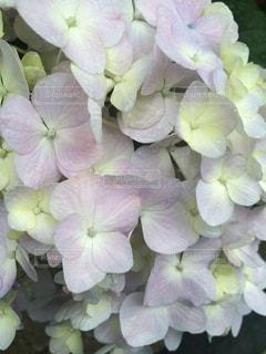 近くの花のアップの写真・画像素材[1125066]
