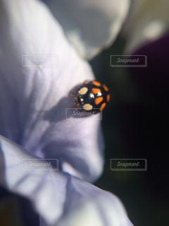 近くの花のアップの写真・画像素材[1125072]