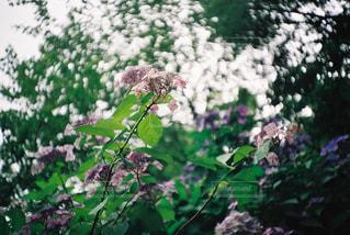 近くのフラワー ガーデンの写真・画像素材[1125088]