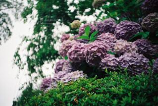 庭の植物の写真・画像素材[1125089]