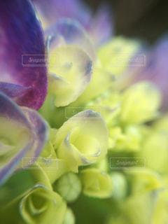 近くの花のアップの写真・画像素材[1125093]