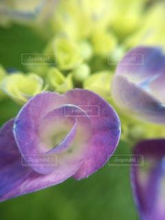 近くの花のアップの写真・画像素材[1125095]