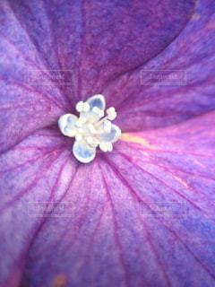近くに紫の花のアップの写真・画像素材[1125096]