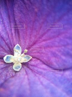 近くの花のアップの写真・画像素材[1125097]