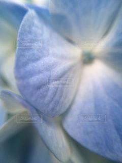 近くの花のアップの写真・画像素材[1125098]