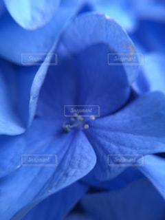 近くの花のアップの写真・画像素材[1125102]