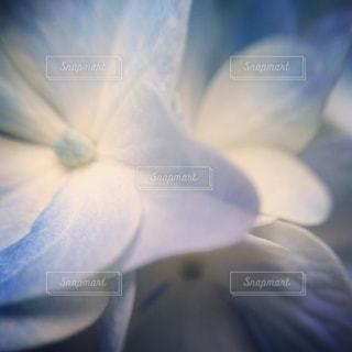 近くの花のアップの写真・画像素材[1125103]