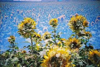 近くの花のアップの写真・画像素材[1125133]