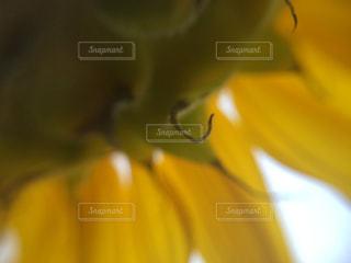 近くに黄色い花のアップの写真・画像素材[1135064]