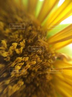 近くの花のアップの写真・画像素材[1135065]