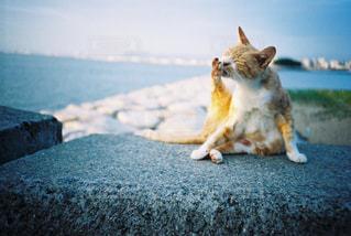 ビーチに座っている犬の写真・画像素材[1135072]
