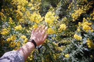 花を持っている手の写真・画像素材[1330246]