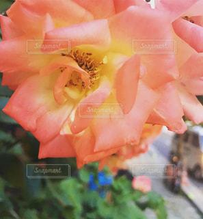 花を持っている手の写真・画像素材[1330256]