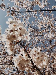 近くの花のアップの写真・画像素材[1944301]