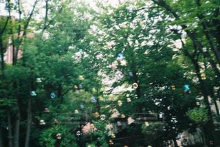 木のクローズアップの写真・画像素材[2312539]