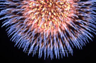 空の花火の写真・画像素材[2334103]