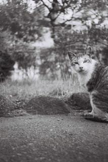 土の上に座っている猫の写真・画像素材[2381475]