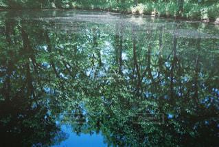 水域の前の木の写真・画像素材[2381504]