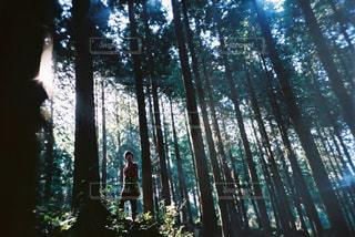 森の木の写真・画像素材[2381580]