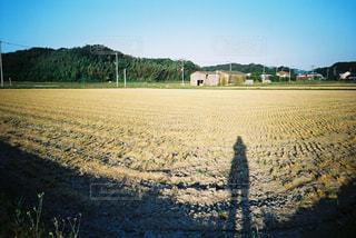 稲刈り後のお散歩の写真・画像素材[2381596]