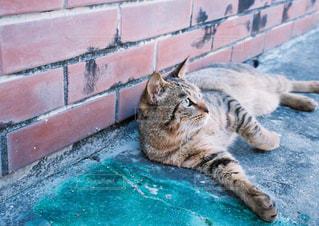 水のプールに横たわる猫の写真・画像素材[2381707]