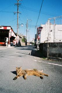 通りを歩いている犬の写真・画像素材[2381708]