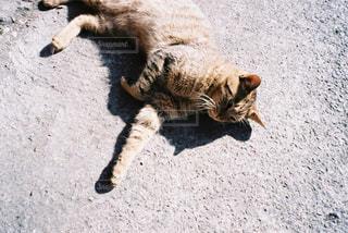 地面に横たわる猫の写真・画像素材[2381710]