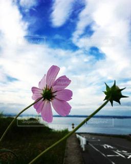 花のクローズアップの写真・画像素材[2961966]