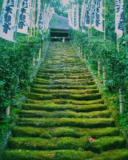 緑の階段の写真・画像素材[1131429]