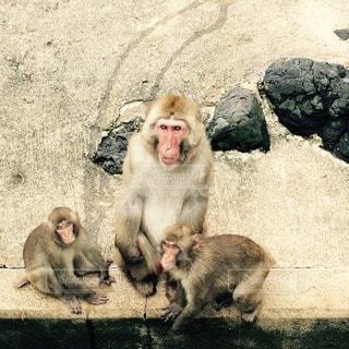 猿の写真・画像素材[35085]