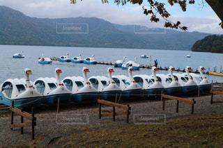 湖のスワンボートがたくさんの写真・画像素材[1127296]