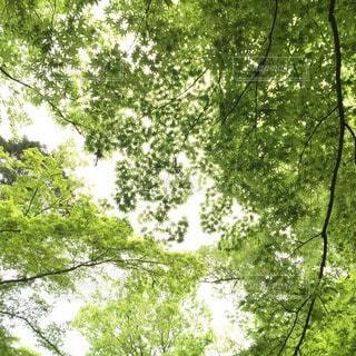 森林の写真・画像素材[153343]