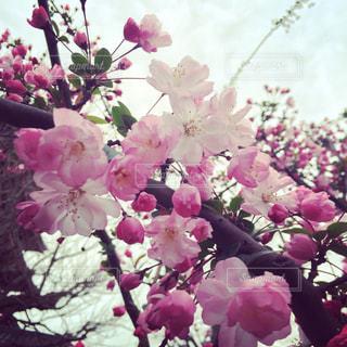 花の写真・画像素材[392037]