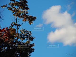 青い空にの写真・画像素材[883410]