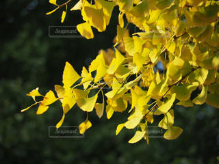 陽にあたるところから変わる色の写真・画像素材[883421]