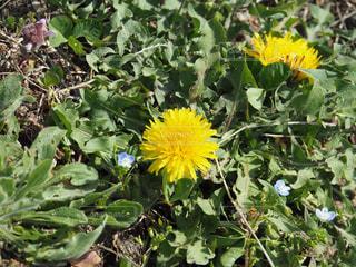 春の訪れの写真・画像素材[1128055]