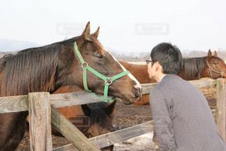 フェンスの横に茶色の馬立ってをかわいがる人の写真・画像素材[1123751]