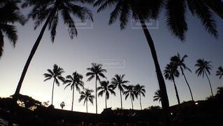 ヤシの木とビーチの写真・画像素材[1123869]