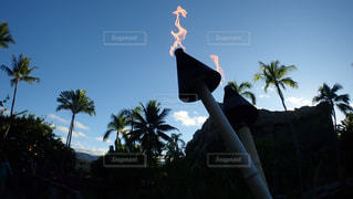 近くのヤシの木の前に照明用ポールのの写真・画像素材[1123871]