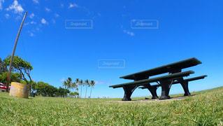 草の中ベンチの写真・画像素材[1123917]