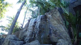 近くの木の横にある岩をの写真・画像素材[1125589]