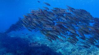 水の中の魚の群れの写真・画像素材[1125659]