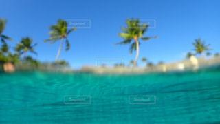 水面からのヤシの木の写真・画像素材[1125664]